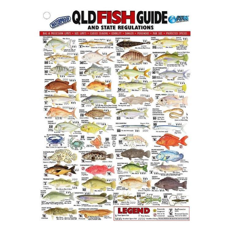 Australian Fishing Network State Fish ID Card Queensland